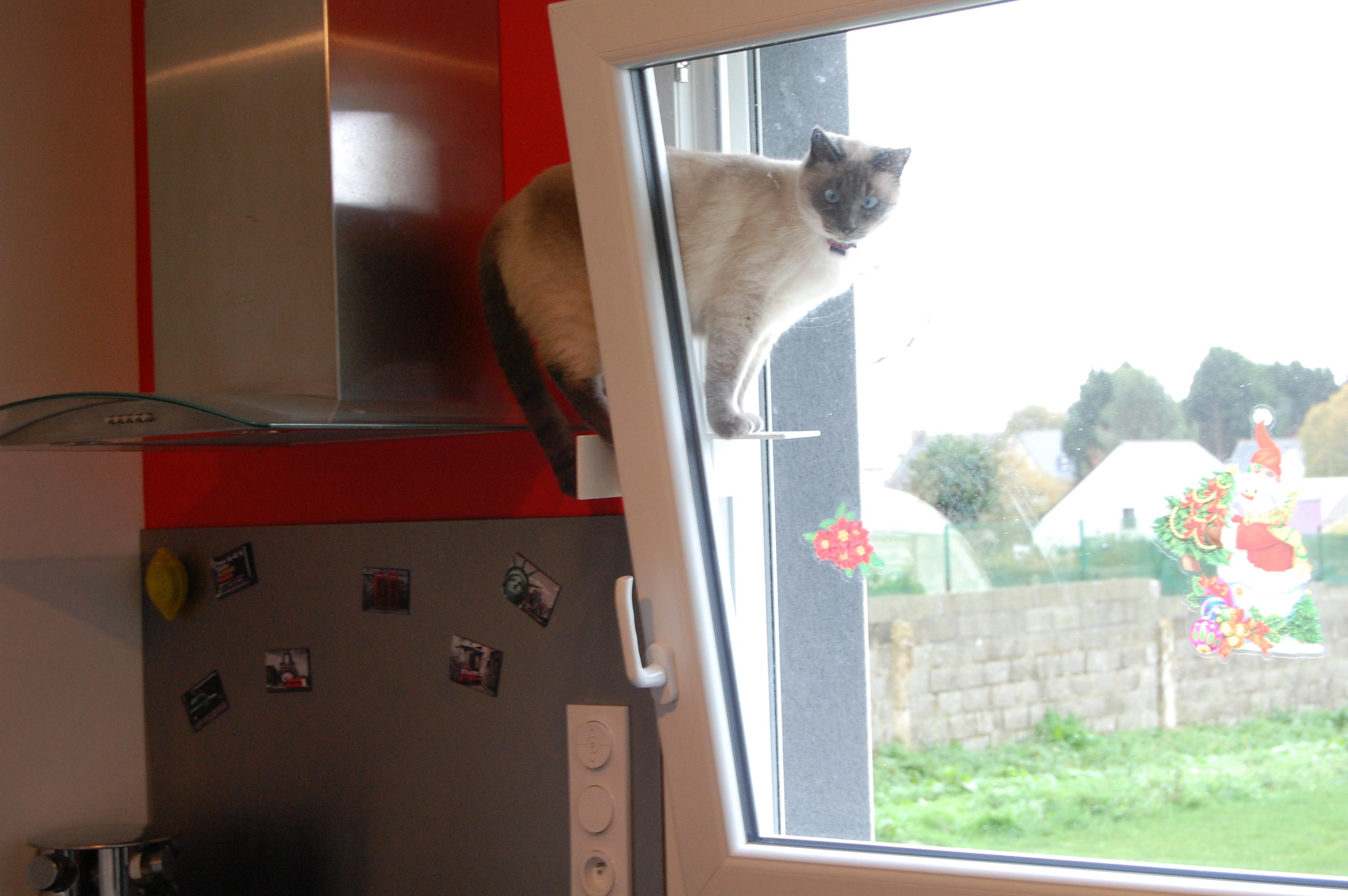 Passerelle Pour Sécuriser Le Passage De Votre Chat