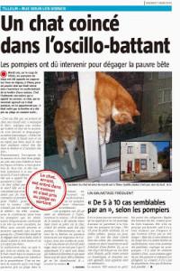 article sur la passerelle pour chats