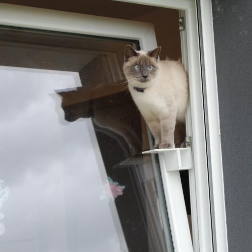 chat-passerelle.fr