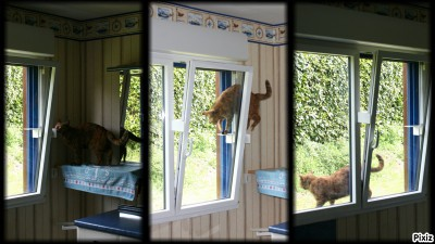 passerelles pour chats